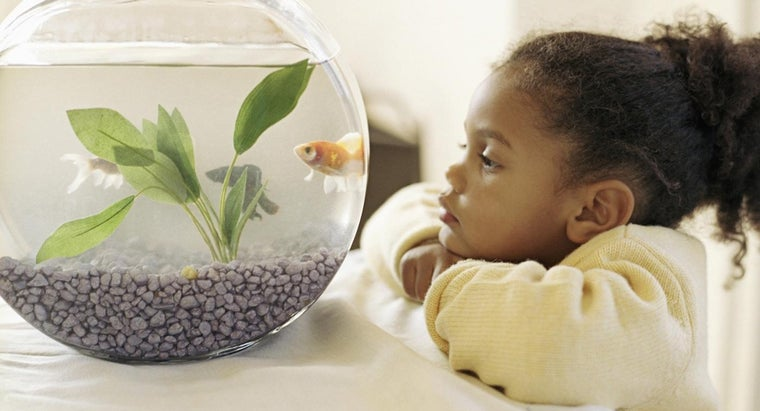 What's a Good Name for a Pet Fish?