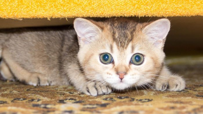 What Products Remove Cat Urine Odor?