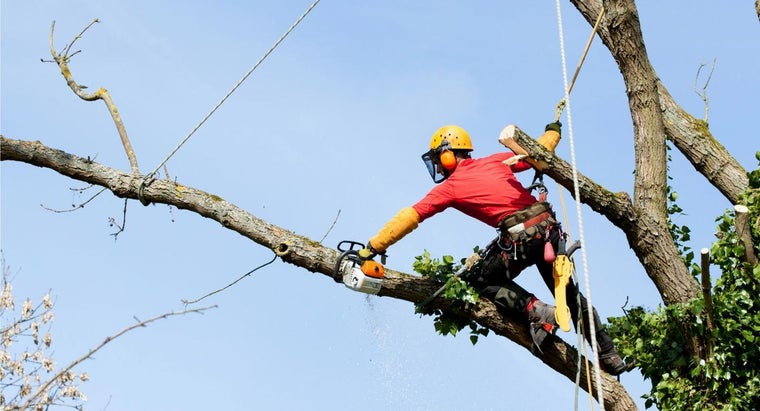 How Do You Become a Certified Arborist?