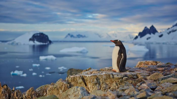 Where can one find information on penguins?