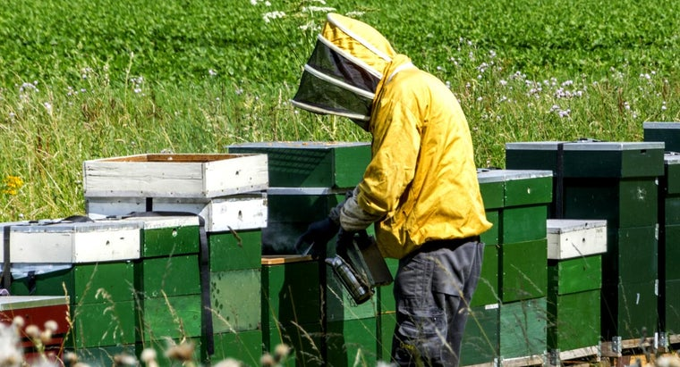 How Do You Find a Local Beekeeper?