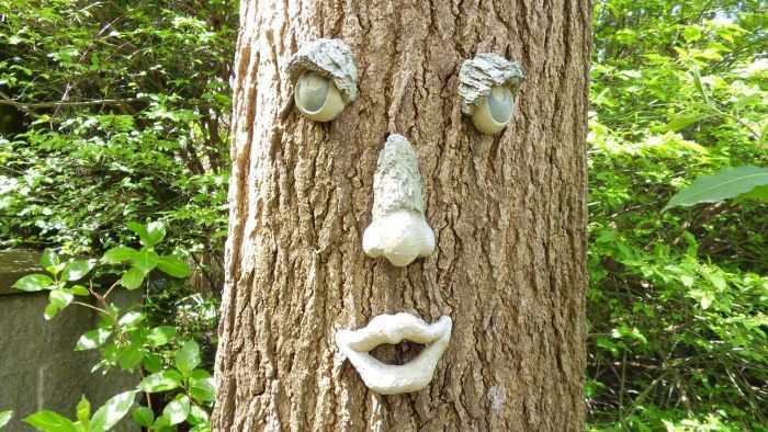 What Trees Can Have Forest Faces?