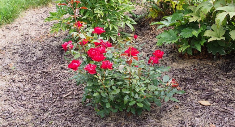 Which Plants Grow Well in a Small Garden?