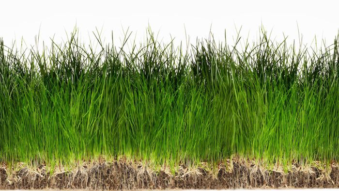 What Are Some Different Types of Grass Seed?