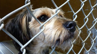 How Are Animal Shelters Funded?