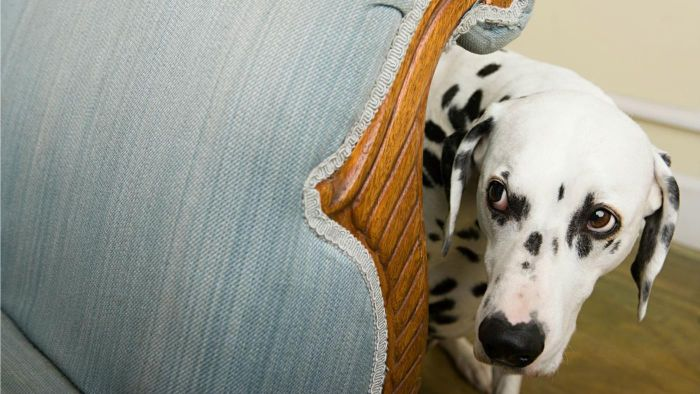 What Are Tick-Borne Disease Symptoms for a Dog?