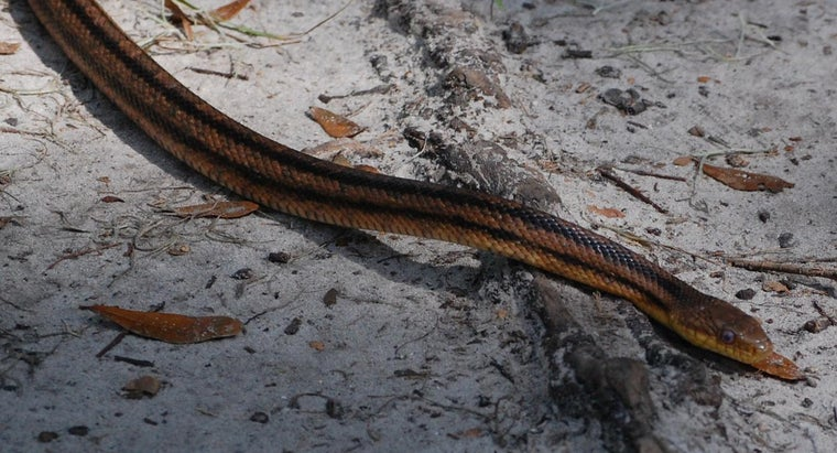 What Are Some Common Snakes Found in Florida Backyards?