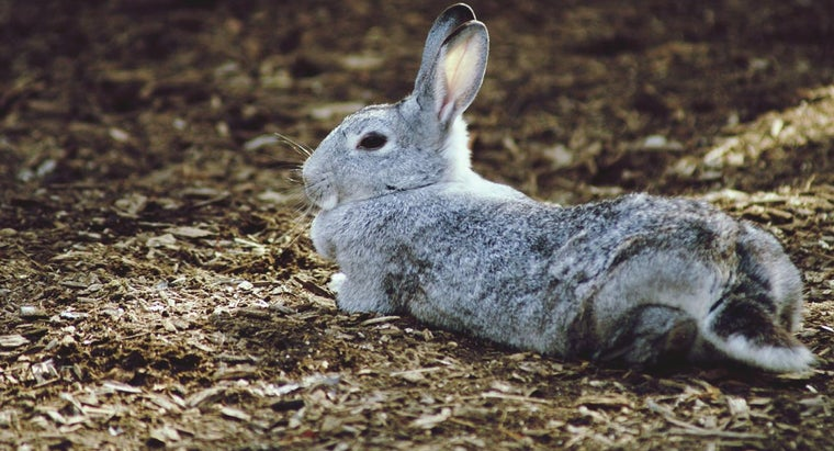 What Are Some Common Names for Pet Rabbits?