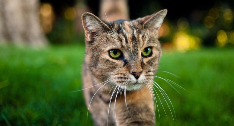 What Are Some Dry Skin Remedies for Cats?