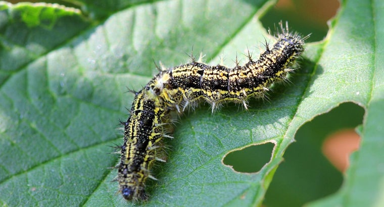 What Are Some Easy Ways to Identify Caterpillars?