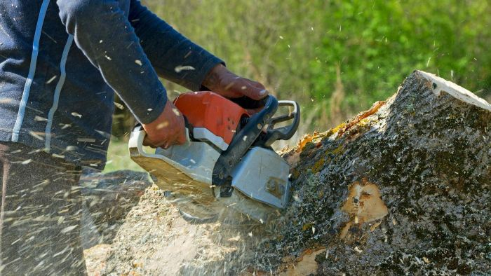 How Much Does It Cost to Remove a Tree and Stump?