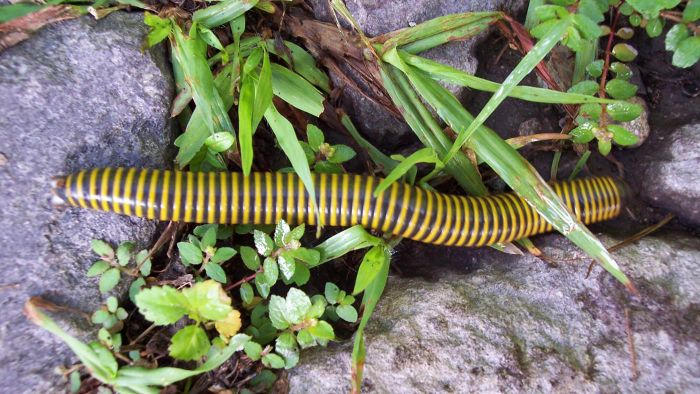 How do you get rid of millipedes?