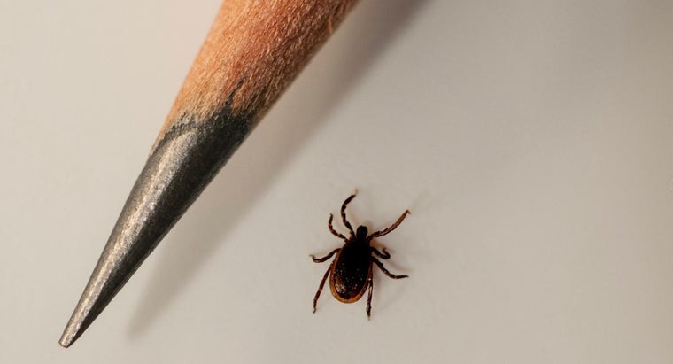 What Are the Death Rates for Lyme Disease?