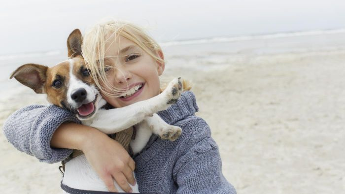 Where Can You View Photos of Common Skin Problems in Dogs?