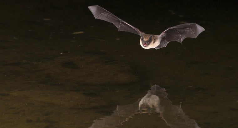 What Are Some Facts About Vampire Bats?