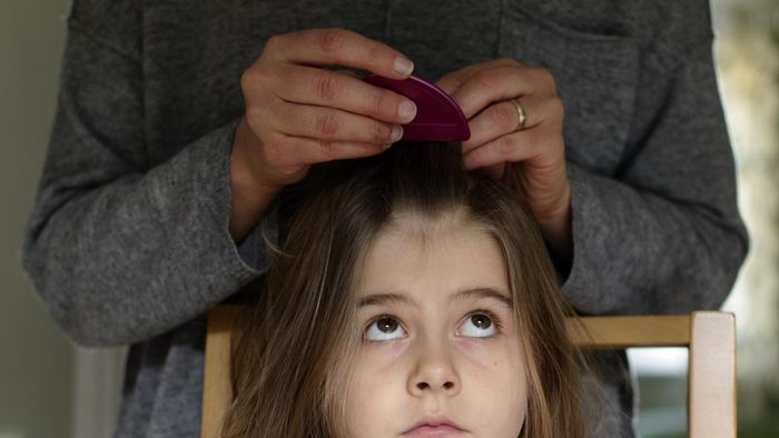 What is the life span of head lice?