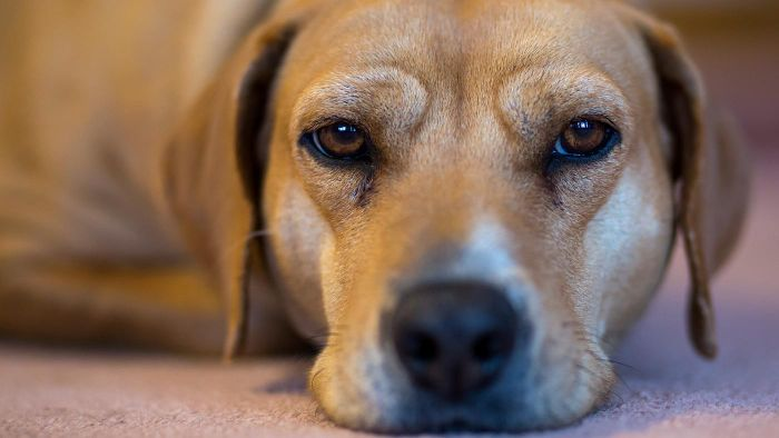 Is it ok to give ibuprofen to dogs?