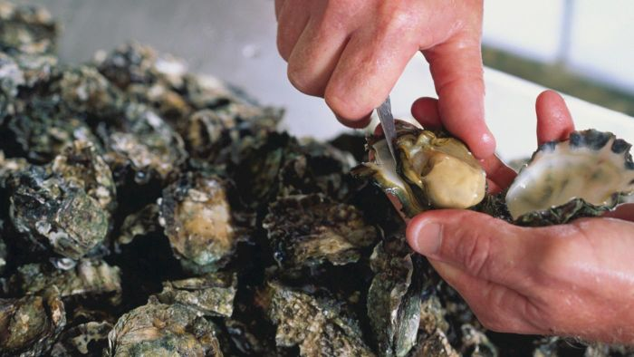 How do you choose an oyster shucking tool?