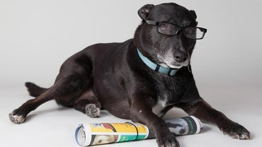 What Are Some of the Smartest Dogs?