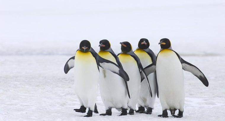 What Are Some Good Online Games About Penguins?