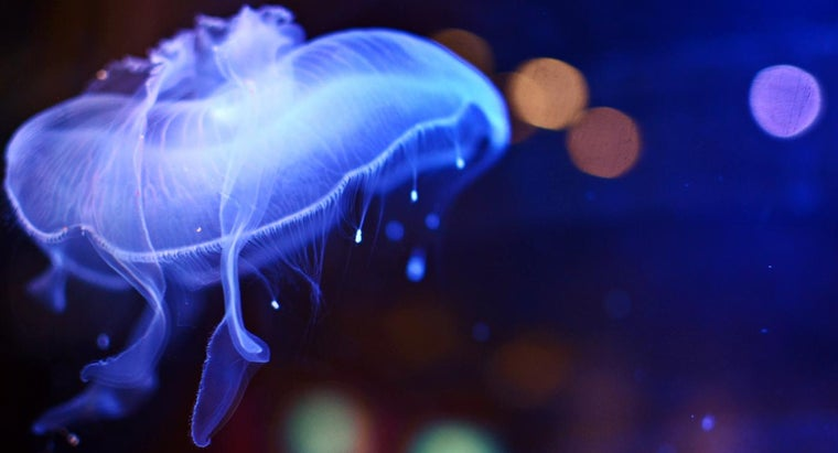 What Is the Best Jellyfish Sting Treatment?