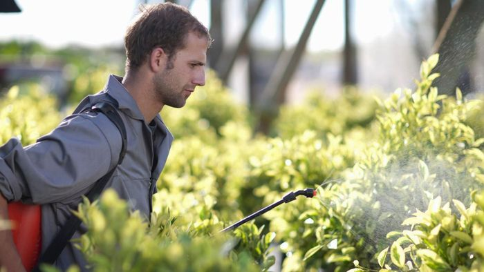 When Is the Best Time to Apply Weed Killer?
