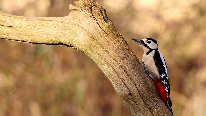 How do you repel woodpeckers?