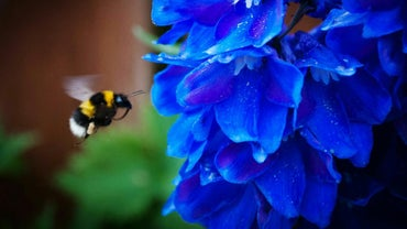 How Do You Get Rid of Bumblebees in Your Yard?