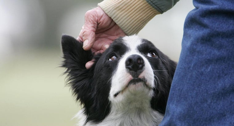 What Are Some of the Most Intelligent Dog Breeds in the World?