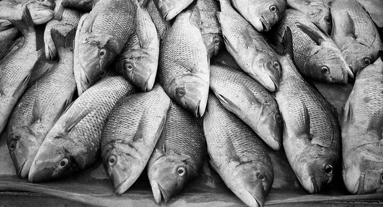 What Are Some Fish That Have Low Levels of Mercury?