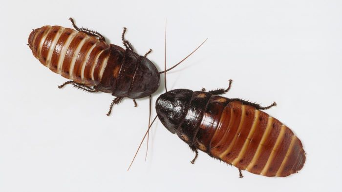 What Are Some Natural Ways to Get Rid of Roaches?