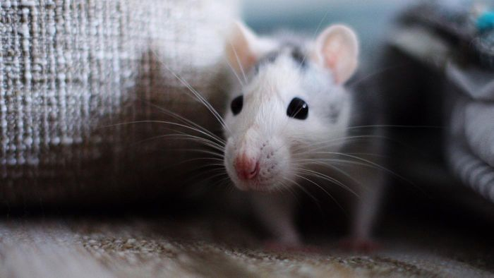 How Do You Catch a Mouse Fast?