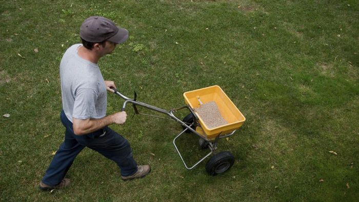 What Are the Top Retailers for Scotts Lawn Weed and Feed?