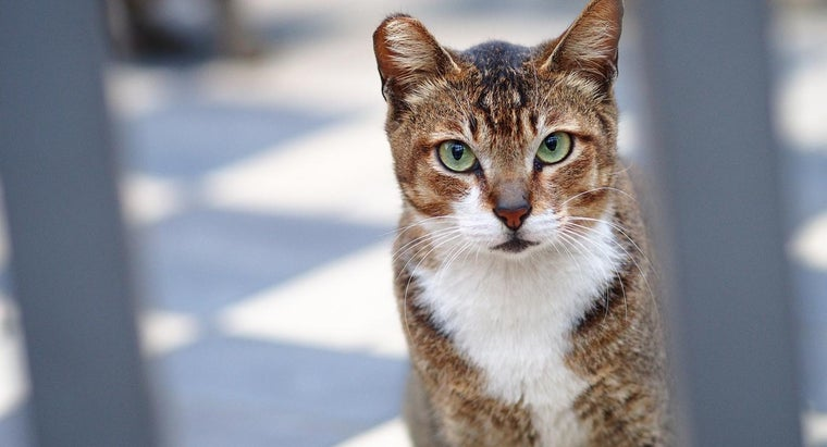 What Are Some Symptoms of Feline Lymphoma?