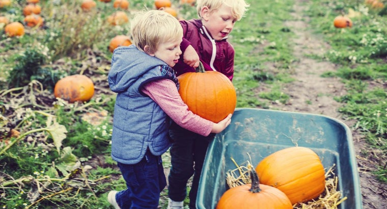 Are Pumpkins Considered to Be a Fruit or a Vegetable?