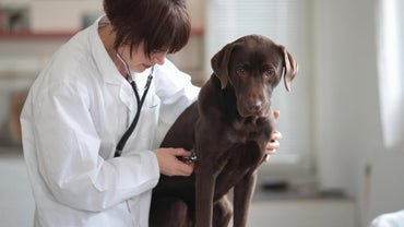 What Is the Average Salary of a Veterinary Assistant?