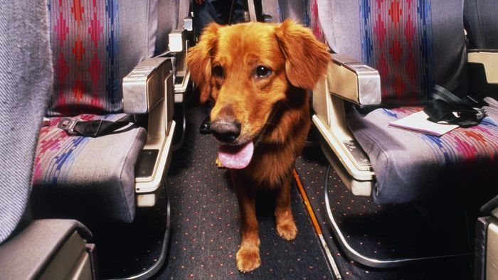 What Are the Guidelines for Pet Travel on Delta Airlines?
