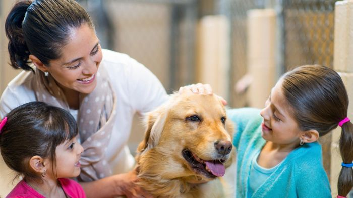 How Do You Adopt a Dog From the SPCA?