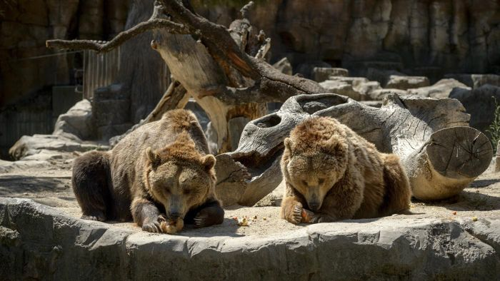 What Are Some Bear Names Used by Zoos?