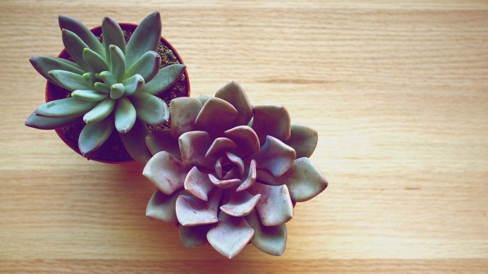 What Are Some Identifying Characteristics of Succulent Plants?