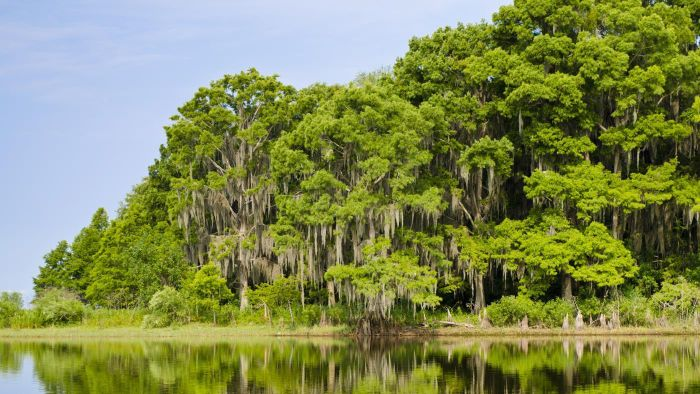 What Are Some Fun Facts About Everglades National Park?