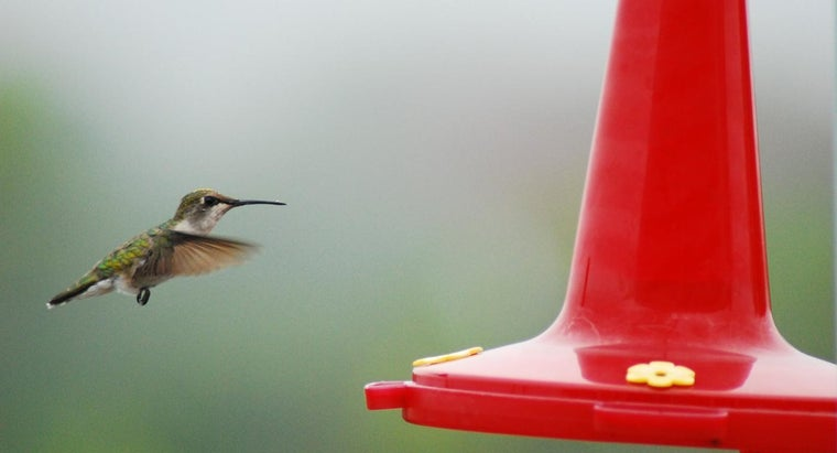 Where Can You Find a Hummingbird Tracking Map?