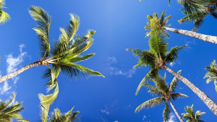 What Are Some Interesting Facts About Palm Trees?