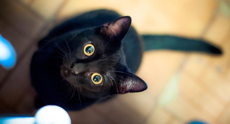 What Are Some Good Names for a Black Cat?
