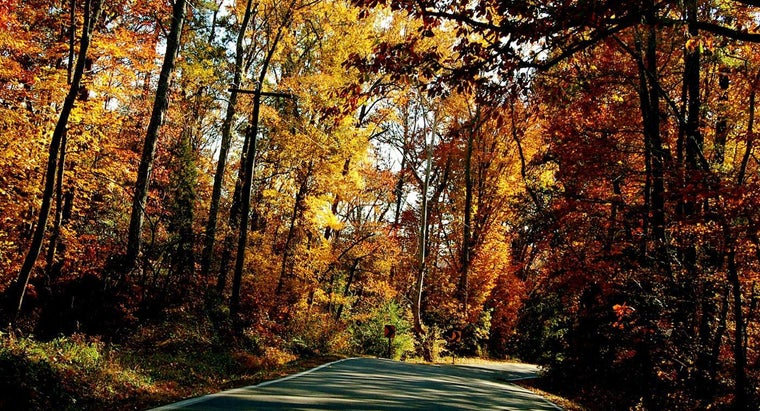 What Are Some Popular Fall Foliage Tours in Virginia?