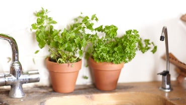 How Do You Grow Vegetables in Pots?