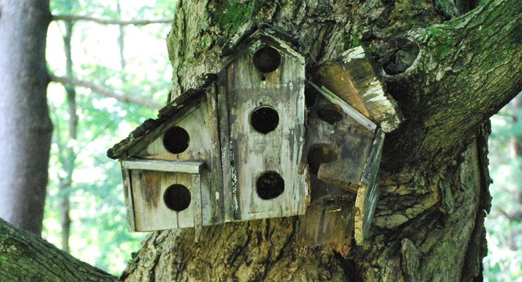 Are There Bird House Plans Online That Do Not Charge?