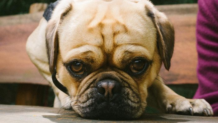 What Are Tips for Buying a Dog Online?