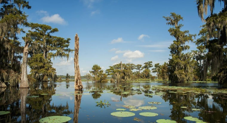 Some Are Some Plants Commonly Found in Wetlands?