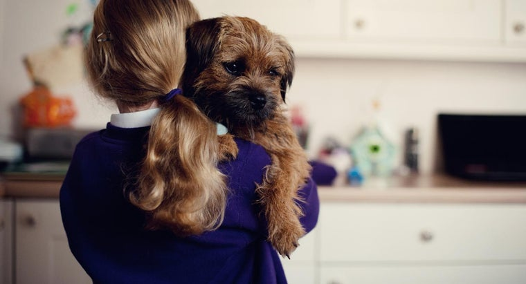 Which Are the Best Dog Breeds for Families With Small Children?